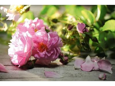 Aceite Esencial Absoluto de Rosa de Damasco