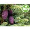 Aceite Esencial de Abeto Negro Silvestre y BIO